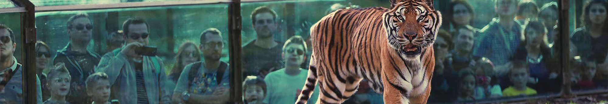 Hôtel + Billets pour Thoiry ZooSafari