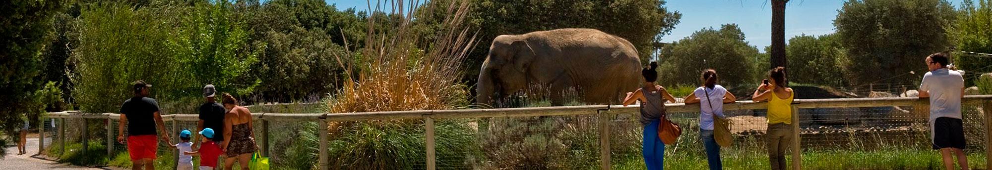 Hôtel + Billets pour le Zoo de la Barben